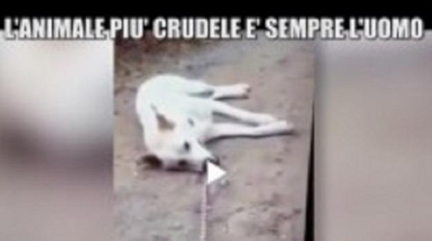 cane ucciso, processo, sangineto, Cosenza, Archivio