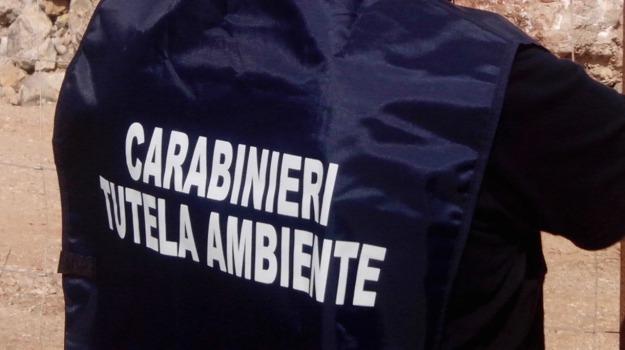 traffico rifiuti, Sicilia, Archivio