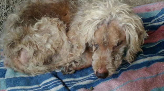 cane abbandonato, cassonetto, messina, salvato, Messina, Archivio