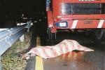 Bergamini è stato ucciso con una sciarpa da più persone