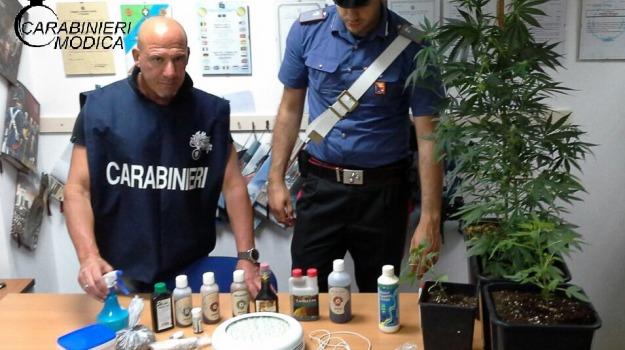 arrestato incensurato, Piantagione in casa, scicli, spaccio droga, Sicilia, Archivio