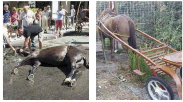 cavallo, oliver, Messina, Sicilia, Archivio