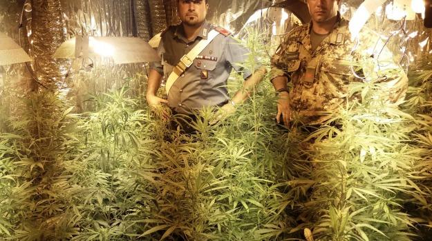 carabinieri, marijuana, messina, mili san pietro, piantagione, Messina, Sicilia, Archivio