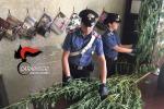 Coltivava piantine di canapa, arrestato 76enne