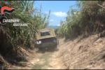 Piantagione scoperta dai carabinieri VIDEO