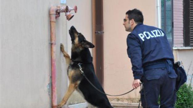 cane antidroga, marijuana, polizia, Sicilia, Archivio