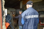 Corse clandestine di cavalli, in 9 nei guai