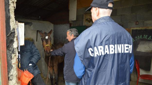 carabinieri, cavalli, clandestine, corse cavalli, Messina, Sicilia, Archivio