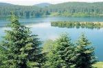 Cosenza, il Consiglio dell'Unione dei Forestali Europei (UEF) si terrà in Sila