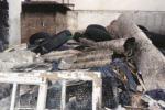 Lotta all'amianto, in Calabria 42 milioni bloccati per una firma