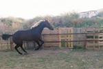 Corse clandestine di cavalli: quattro denunciati nel Siracusano