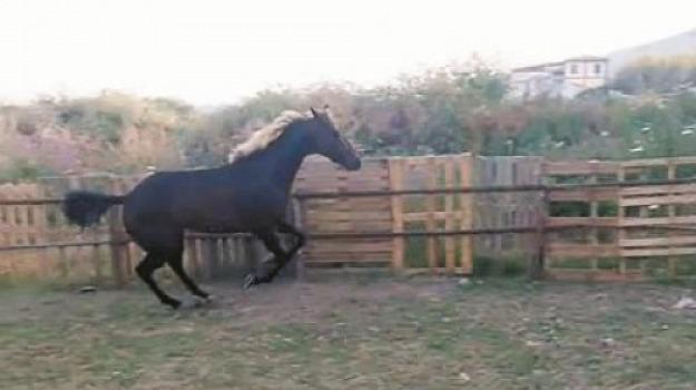 cavalli, corse, siracusa, Sicilia, Cronaca