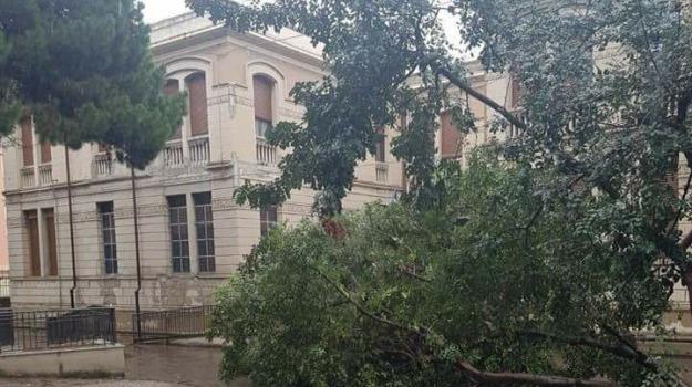 albero caduto, maltempo, messina scuola, pascoli crispi, Messina, Archivio