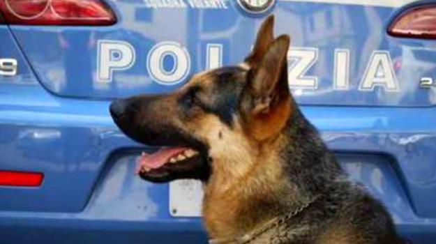 5 arresti, furti in abitazione, Messina, Sicilia, Archivio