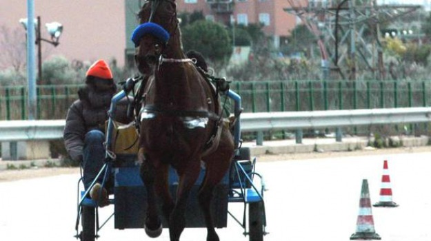 cavalli, cora clandestina, palermo, Sicilia, Archivio