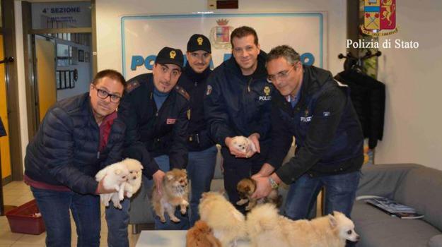 'La carica dei 101', cuccioli, furto, Sicilia, Archivio