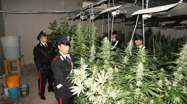 marijuana, palermo, Sicilia, Archivio