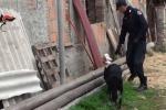 Arresti a Limbadi, il video dei Carabinieri