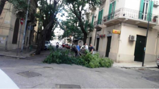 caduta alberi, via Tripepi, Reggio, Archivio