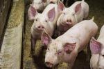 Antibiotici, accordo Ue su limiti a uso in allevamenti
