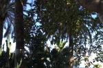 Crolla un altro albero in via Marina, danni a un'auto