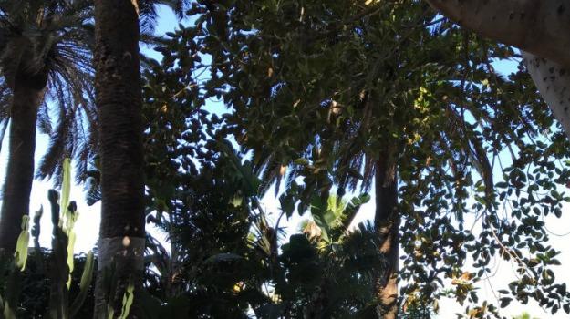 alberi, gruppo di lavoro, Saverio Tignino, Messina, Archivio