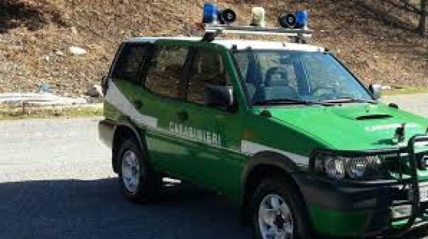 arrestato, Carmine Greco, maresciallo carabinieri forestali, Catanzaro, Cosenza, Calabria, Archivio