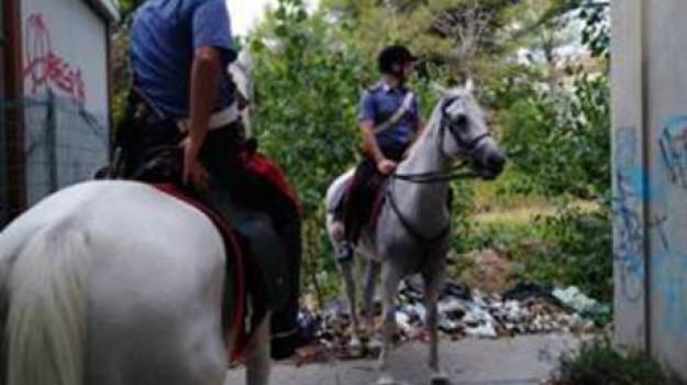 carabinieri, cavallo, vibo, Catanzaro, Archivio