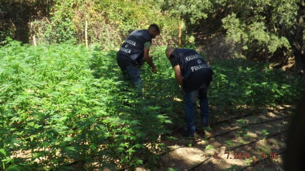 bovalino, cannabis, Reggio, Calabria, Cronaca