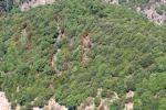 Scoperte tre piantagioni di canapa indiana