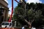 Potatura degli alberi a Messina, ecco l'elenco delle strade con divieti di sosta