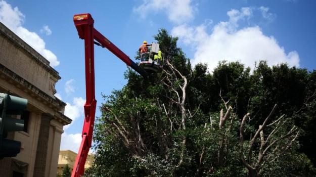 divieto di sosta messina, potatura alberi messina, Messina, Sicilia, Cronaca