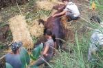 Cavallo salvato dai vigili del fuoco
