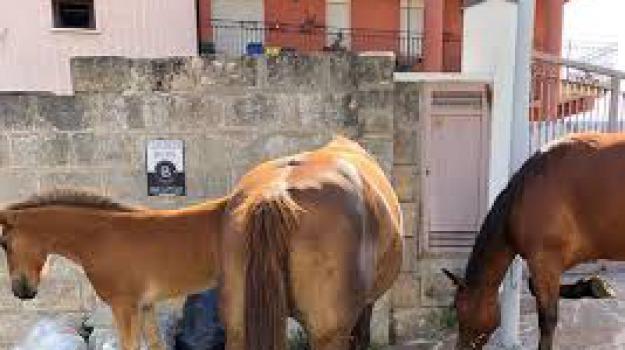cavalli, In centro, Catanzaro, Archivio