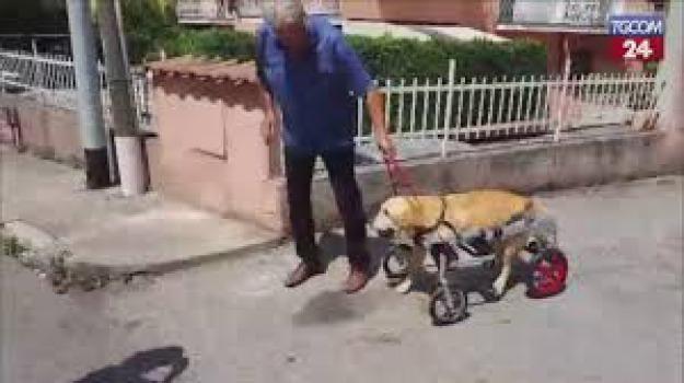 cane carrelino, Dylan, morto, Catanzaro, Calabria, Archivio