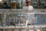 Una linea di produzione farmacologica italiana