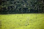 Fao, superficie globale foreste diminuisce ogni giorno