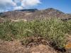 Vino, nel regno del Passito torna Pantelleria Doc Festival