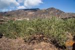 """Viticoltura eroica"", festival a Pantelleria"
