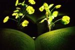 Piante modificate con nanoparticelle che le accende come lampadine (fonte Kwak Seonyeong)