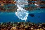 Pulire il mare da plastica e rifiuti, a Messina ci pensano i pescatori subacquei
