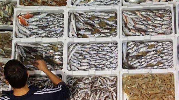 pesca, regione calabria, Gianluca Gallo, Calabria, Politica