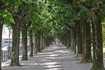 In città gli alberi crescono più in fretta della campagna (fonte: Pixabay)