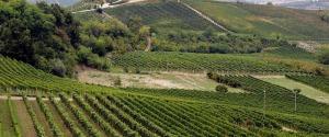 Truffa sui finanziamenti in agricoltura, domiciliari per una coppia di Messina