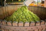 Vino: Uiv, Italia si conferma primo produttore al mondo
