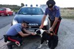 Cane abbandonato sulla ss106 ionica salvato dai carabinieri