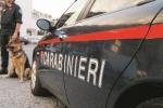 Forza posto di blocco e investe un carabiniere