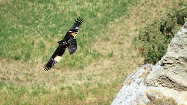birdwatching calabria, Calabria, Società