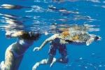 Brancaleone, sarà rinnovato il comodato: il centro tartarughe è salvo