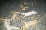 Avvelenati 10 cani